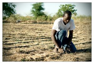 Beer-Sheba planting tomatos