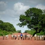 In Line Mali