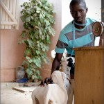 Tailor and his sheep Senegal