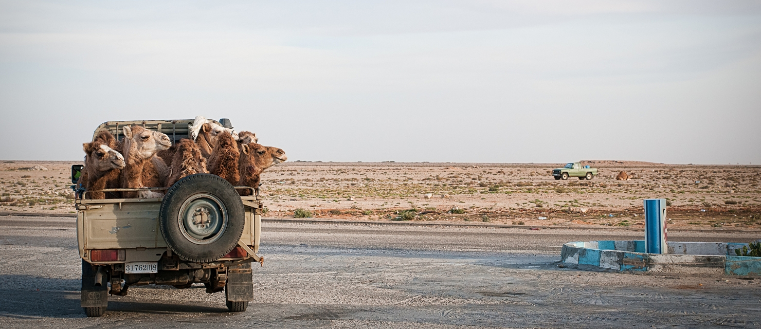 Camel Pick-up