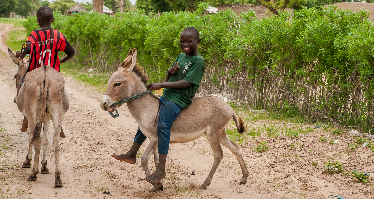 How to tame a donkey?