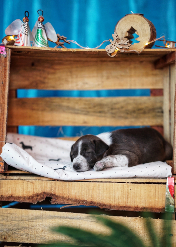 Street pup finds home