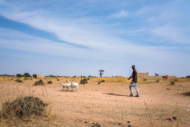 Herder onderweg naar huis